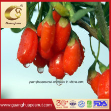 No Added Organic Gojiberry From Ningxia