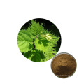 High Quality Natural Factory Supply Best Price Nettle Extract
