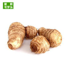 New Arrival High Quality Fresh Taro