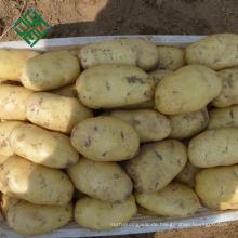 China Frische Kartoffeln Lieferant 200g Frische Kartoffeln