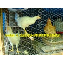 Hochwertiger guter Preis Sechseckiges Mesh (Chiken Nettting)