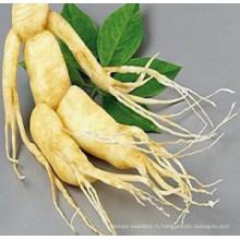 Extrait de ginseng Halal Panax 6-10% Ginsenosides HPLC / UV