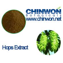 Bier-Hopfen Extrakt Flavonoide