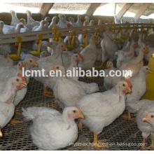 Manufacturer best quality chicken floor raisng equipment for sale
