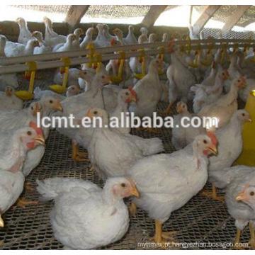Fabricante de melhor qualidade frango chão raisng equipamentos para venda