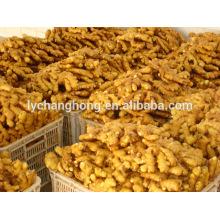 factory wholesale 2014 new crop fresh Linyi origin