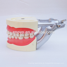Modelo de ensino dental de goma macia para dentes preparando treinamento 13010