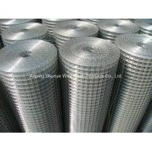Treillis métallique soudé pour la clôture (usine de la Chine)