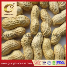 Bulk Price Peanut in Shell From China