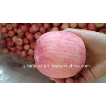 2015crop FUJI Apple (calidad estupenda)