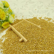 Yellow Millet In Husk for Human 2012