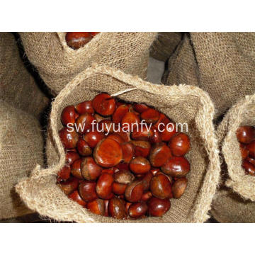 Sweet Organic Fresh chestnut 80-100pcs