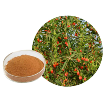 Herbal Goji Berry Extract Powder