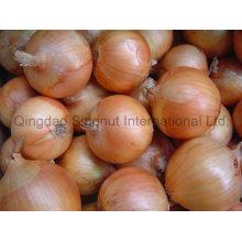New Crop Fresh Yellow Onion of Good Quality