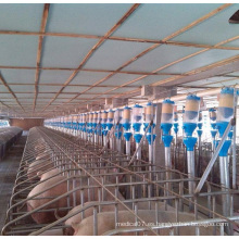 Agricultura Sistema de alimentación de cerdo automático de alta calidad