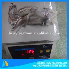 Fournir toutes sortes de têtes de squid et de squash congelés riches en nutriments