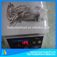 supply all kinds of nutrient rich frozen squid head and squid tentacle