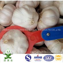6.0cm Normal White Garlic 10kgs Carton From China