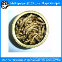 Dried Mealworms for Wild Birds Food