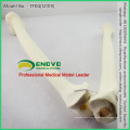 WHOLESALE SIMULATION BONE 12315 Medical Anatomy Artificial Femur + Tibia Bone , Orthopaedics Practice Simulation Bone