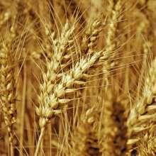 herbicides with glyphosate herbicides