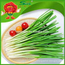 Best Price for Frozen Chinese Chives