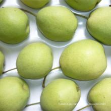 Pera verde fresca de Shandong para o mercado de India