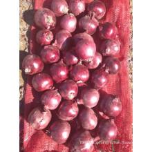 Export New Crop Boa Qualidade Competitiva 3-5cm Cebola Vermelha