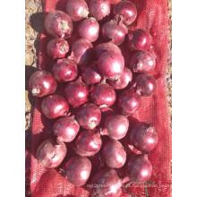 Exportação Nova Colheita Boa Qualidade 3 - 5 Onças Cebola Vermelha
