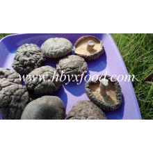 Setas de shiitake completamente secas lisas orgánicas a granel