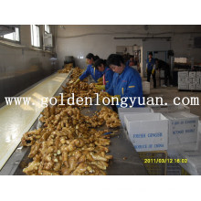 Fresh Ginger From Local Factory