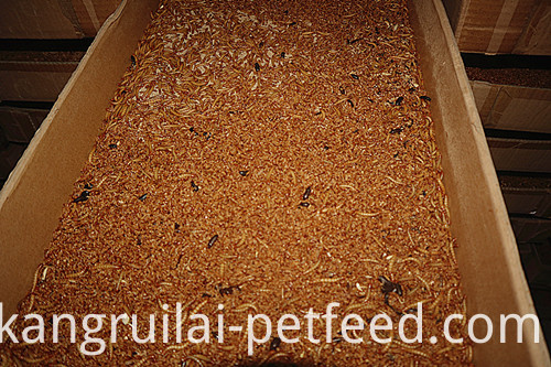 Golden Yellow Dried Mealworm Pet Feed