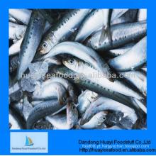 Fornecedor de peixe de sardinha
