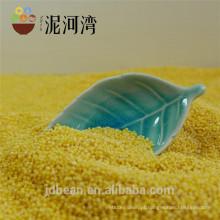 Milheto amarelo milho broomcorn amarelo 8311