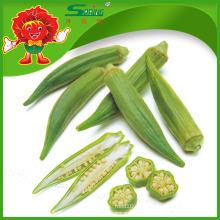 Yunnan Native Vegetables Proveedor chino de okra congelado
