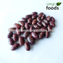 Planting red beans supplier in china