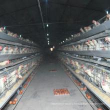 Jinfeng Broiler Farm Equipment