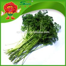 2015 Vegetales frescos perejil verduras congeladas alimentos ecológicos verdes