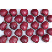 huaniu apple,apple,fresh fruit
