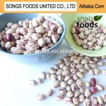 Kidney beans market price