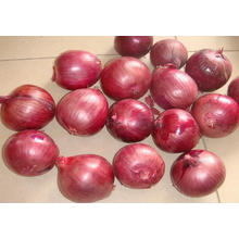 100% New Crop Export Good Quality Red Onion