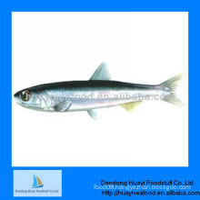 frozen anchovy seafood