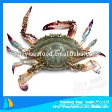 De Boa Qualidade Shell Shell congelado para venda