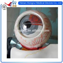 ISO Advanced Medical Eyeball Model