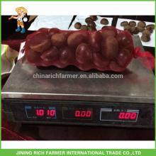 Hot Sale Chinese Factory Castanha fresca embalada em saco de juta