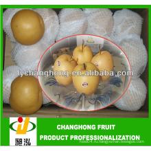 Китайская груша Singo / китайская груша фэншуй