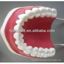 Modelo de estilo dentário médico de estilo novo, dentes dentários