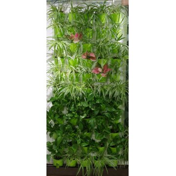 Wall Plant for Indoor Living Wall Vertical Garden Green Wall