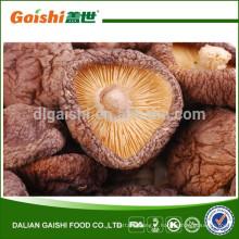 Gaishi de haute qualité séché champignons Shiitake
