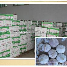 Chinesischer Knoblauch zum Verkauf
